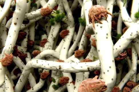allergosystem