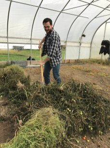 Helping to clear harvested plants on the UMD farm