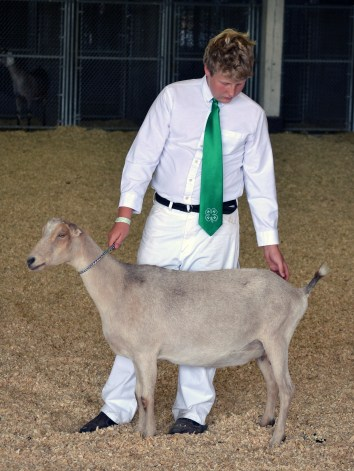 Demonstrating proper dairy goat show attire and displaying his animal.