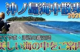 沖ノ島海の中の様子を伝えます! 2020年10月