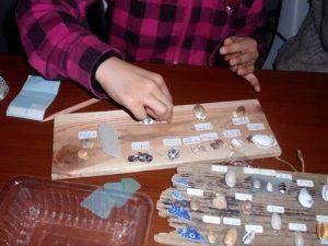 貝殻の標本作り