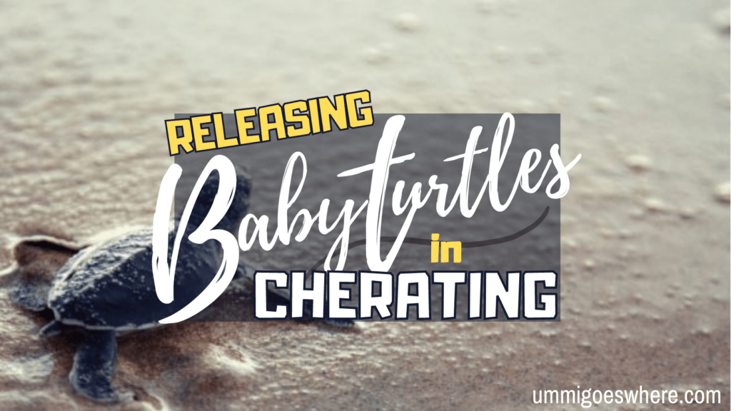 Releasing Baby Turtles in Cherating   Ummi Goes Where?