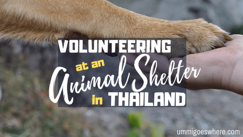 Volunteering at an Animal Shelter in Thailand | Ummi Goes Where?
