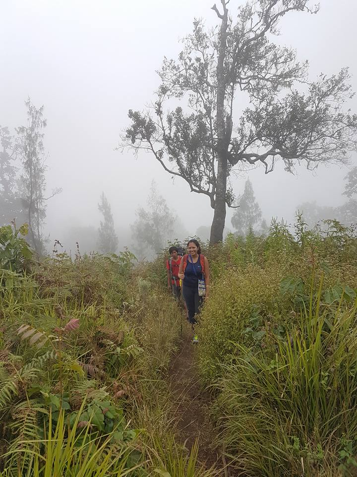 Misty grasslands on Mount Rinjani