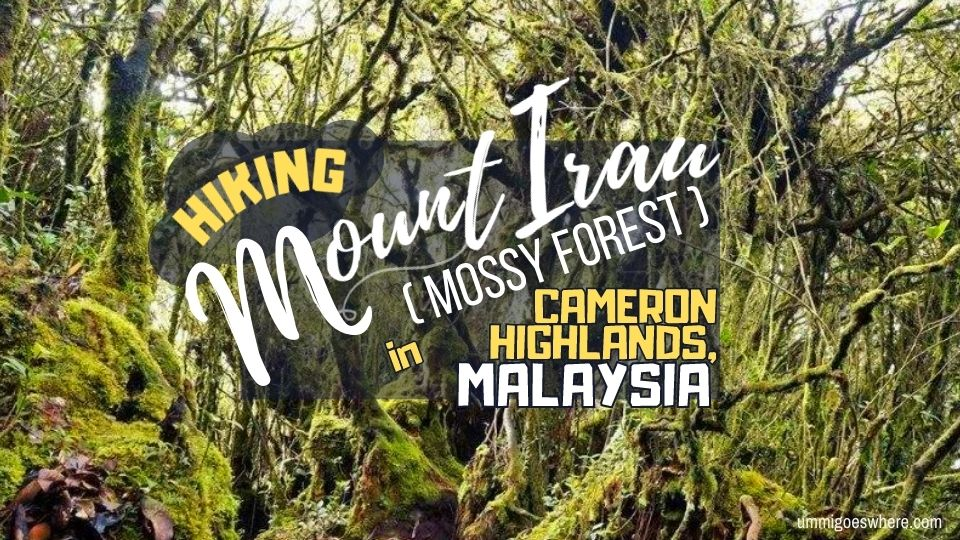 Hiking Mount Irau Mossy Forest Cameron Highlands