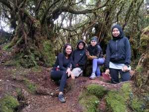Hiking Mossy Forest Mini Irau