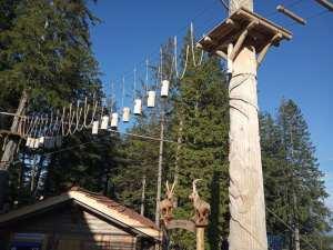 Pilatus rope course challenge