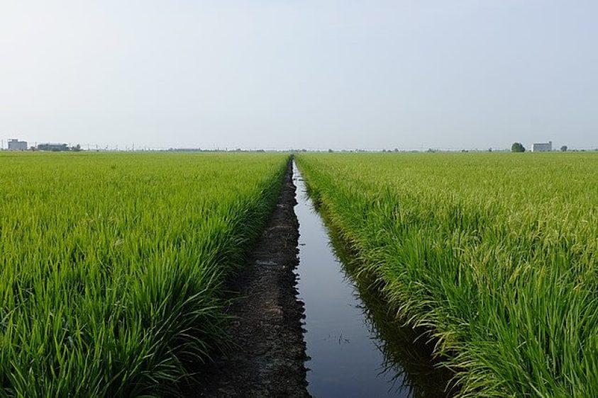 Sekinchan paddy fields