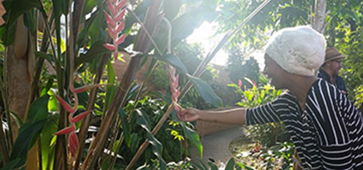 Onyx Henry at Matthaei Botanical Garden web