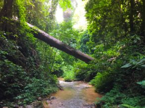 Forest in Chiang Mai