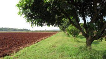 Khao Yai fields