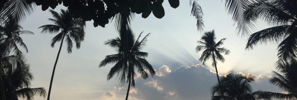 Palms view in Thailand