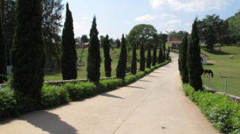 Suwan Farm