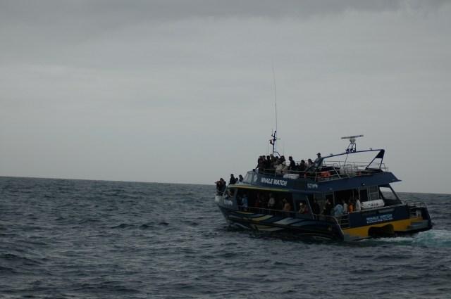Whale Watch em Kaikoura