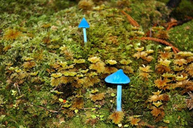 Cogumelos Azuis nas florestas da Nova Zelândia