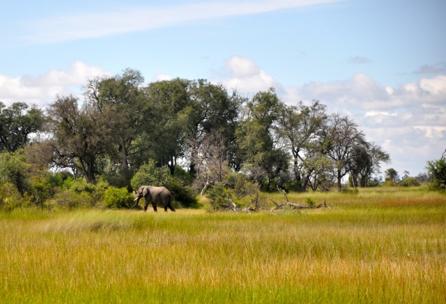 O elefante na porta da barraca