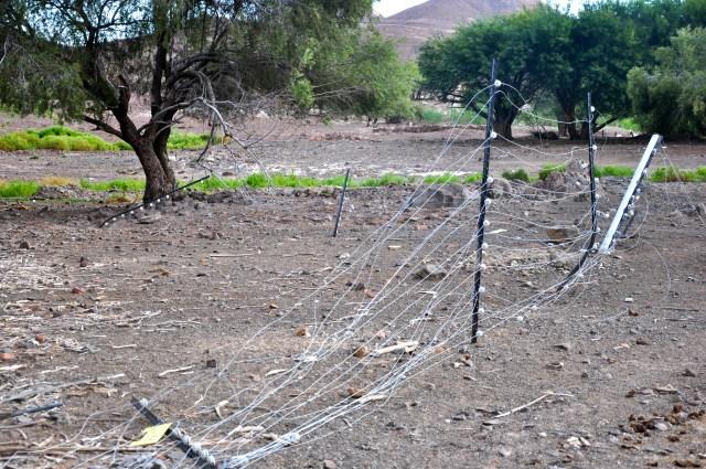 A cerca elétrica destruída pelos elefantes.