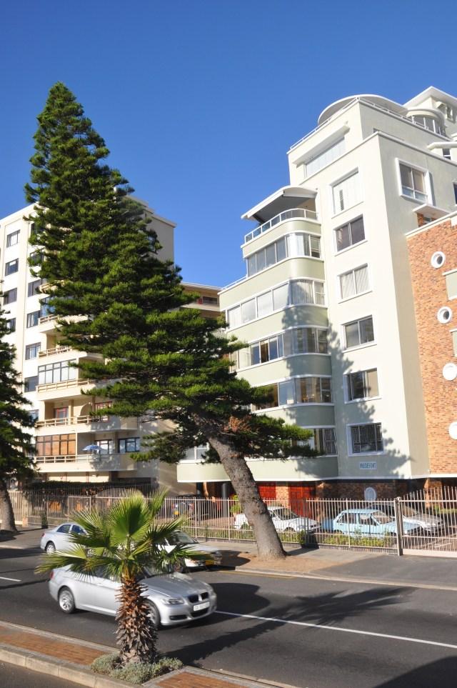 Pinheiro inclinado pelos fortes ventos do Cabo.