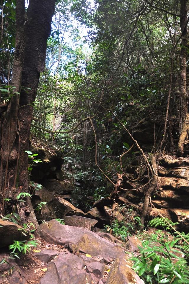 A vegetação é abundante na trilha para o Buracão