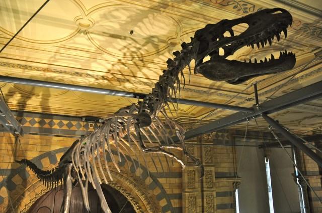 Os fósseis de dinossauros chamam a atenção no Museu de História Natural