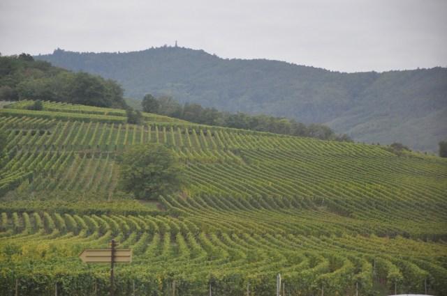 Os vinhedos da Alsácia na região dos Vosges