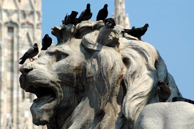 O leão da praça da Catedral.