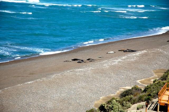 A Praia de Porto Cantor, o paraíso dos elefantes-marinhos.