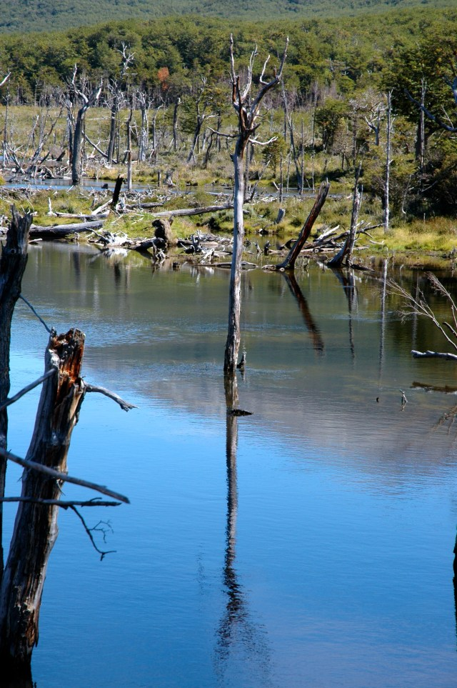 As árvores mortas no meio dos diques.