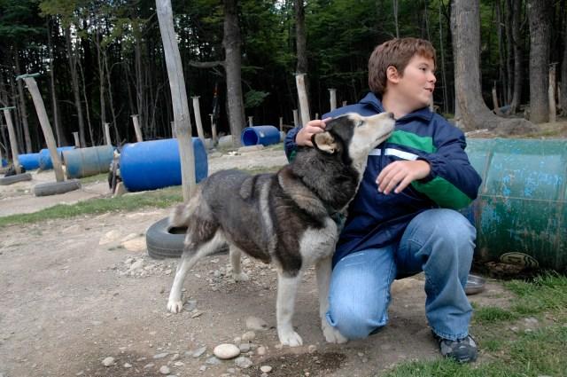 Os cães huskys siberianos são usados para passeios de trenós nos arredores de Ushuaia.