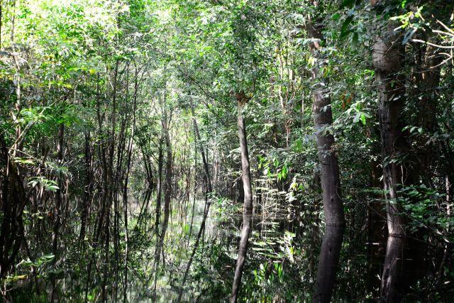 Os igapós correspondem às florestas inundadas.