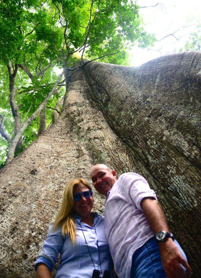 Árvores gigantescas nos igapós.