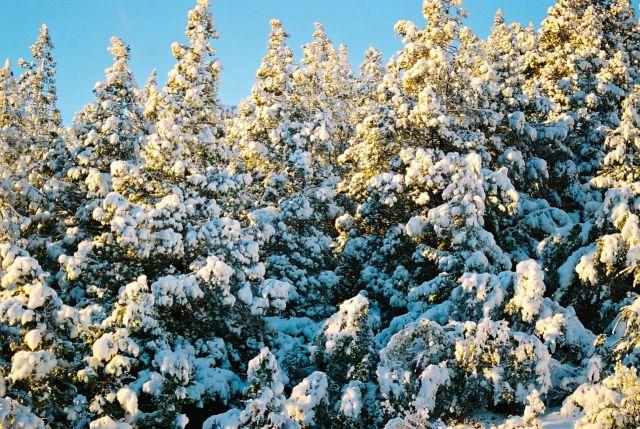 As florestas totalmente cobertas de neve.