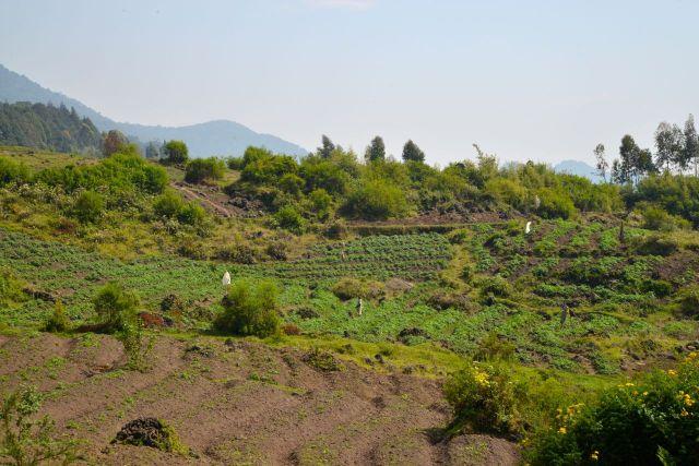 Montanhas e agricultura familiar de subsistência, por todo o país.
