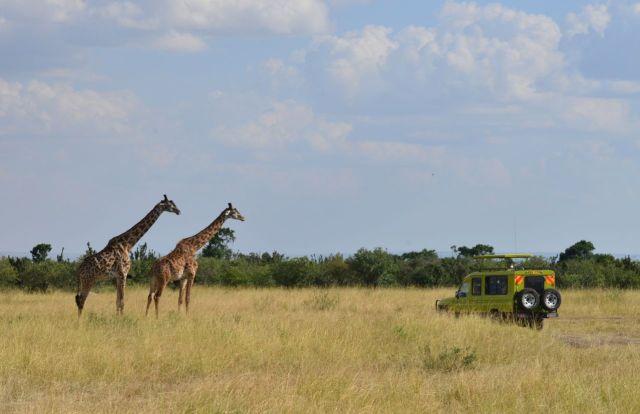 Os safaris fotográficos.