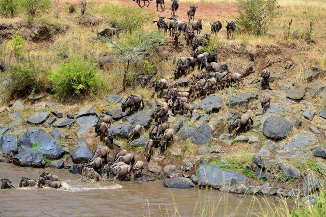 A grande travessia do Rio Mara.