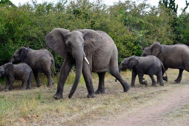 Elefantes.