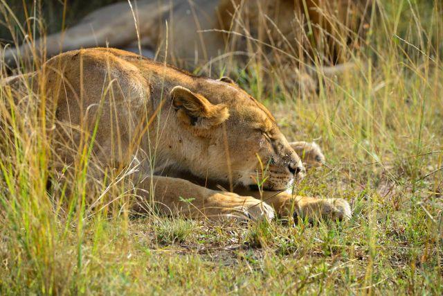 O Lago Manyara é uma excelente área para safaris fotográficos.