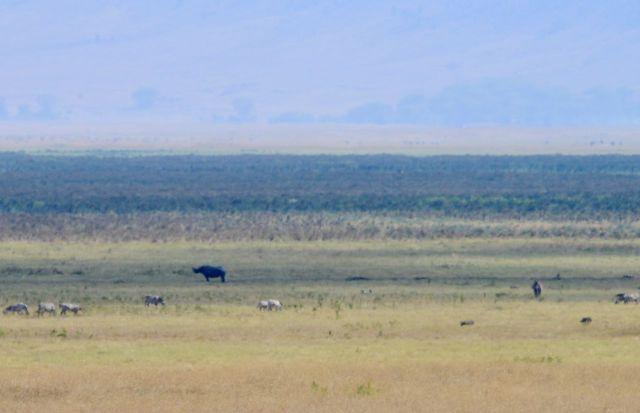 O rinoceronte estava muito distante.