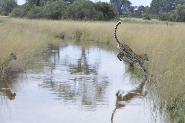 O salto do leopardo