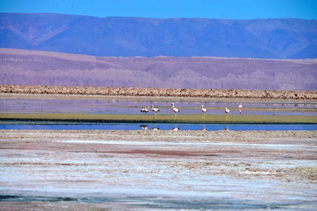 A Lagoa Chaxa.