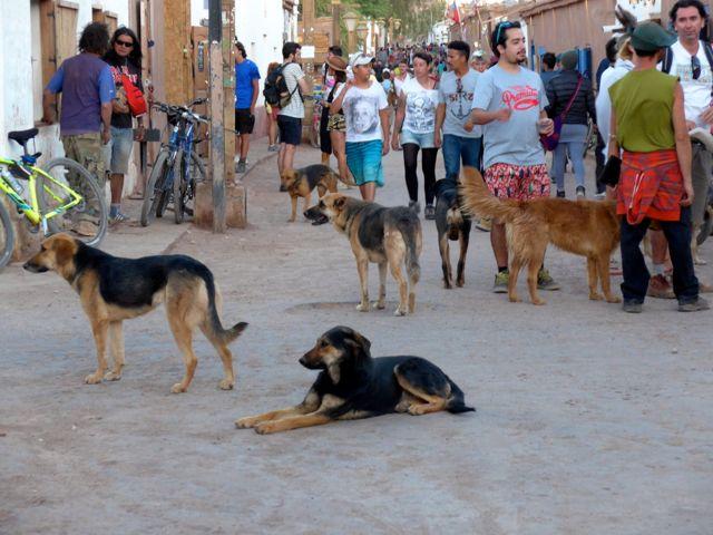 Cachorros e poeira por toda parte na Caracoles.