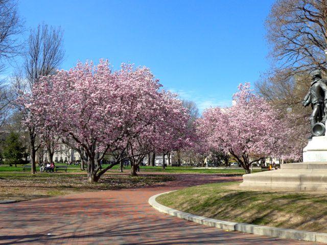 As cerejeiras dão um charme especial à cidade, nessa época do ano.