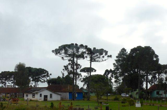 A paisagem rural na estrada para Curitiba.