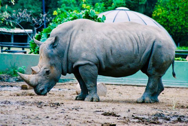 O zoológico é uma atração importante de Buenos Aires