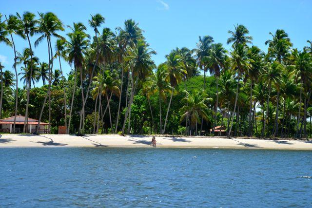 O coqueiral da Praia dos Carneiros