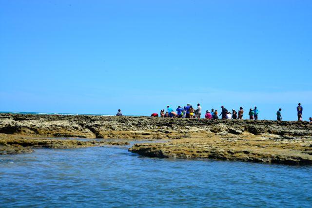 As piscinas naturais da Praia dos Carneiros não valem a pena.