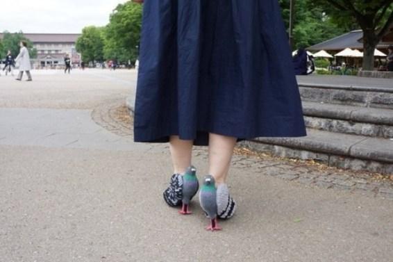 Sapato pombo