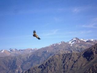 Vôo do Condor - Peru