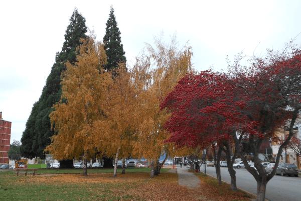 Bariloche - Outono