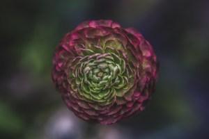 A photo of a single flower by Matthew Henry on Unsplash